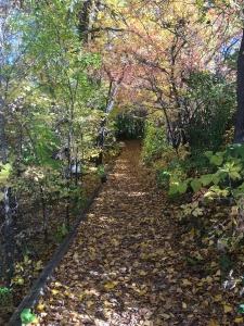 diamond-lake-path