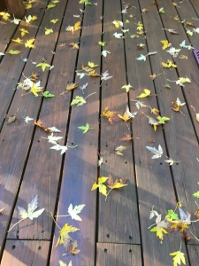 leaves-on-the-deck
