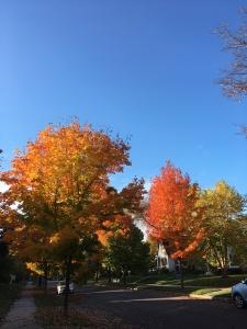 street-leaves