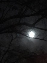 Moon in tree.JPG