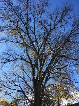 tree structureJPG.JPG