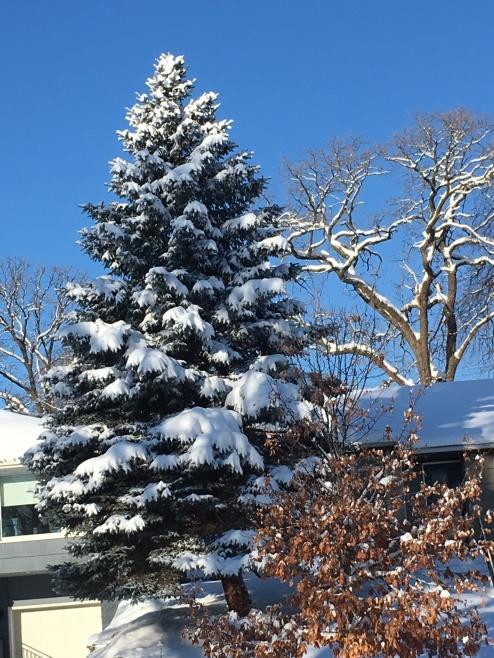 winter storm 2JPG.JPG