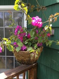 deck flowers 2